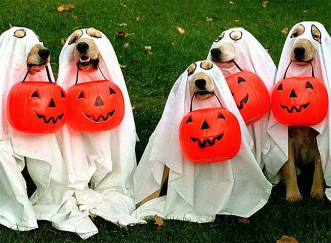 funny-halloween-animal-pictures