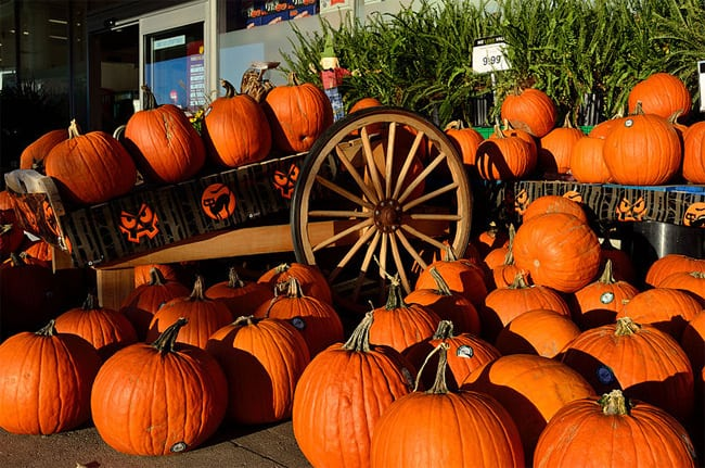 super-halloween-pumpkin-pictures-2016-17