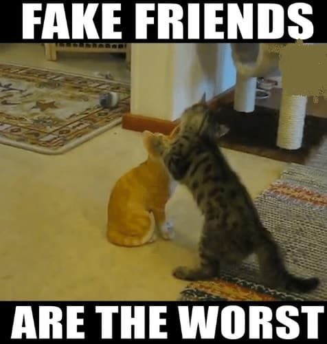 true and funny fake friend memes