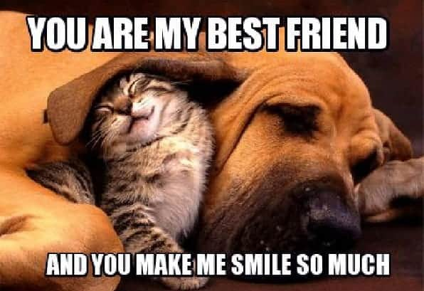 hilarious best friend memes