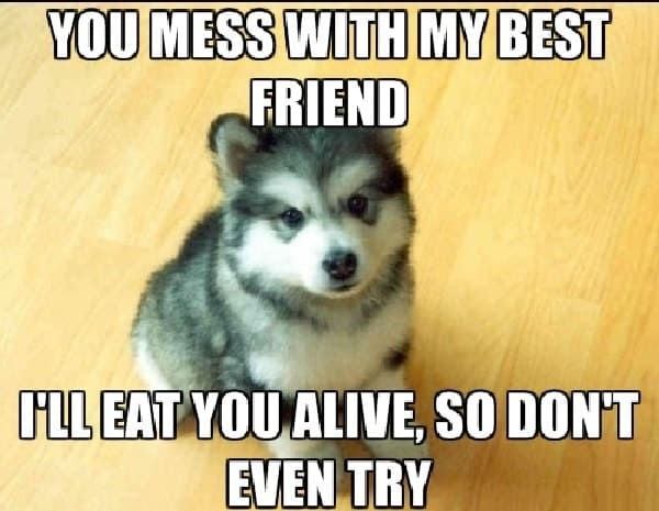 funny memes for best friend