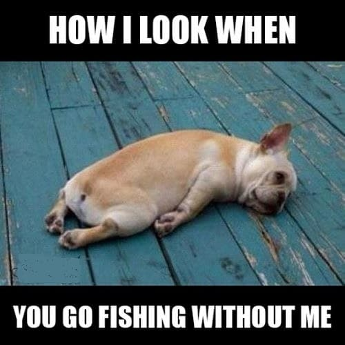 fishing memes to laugh