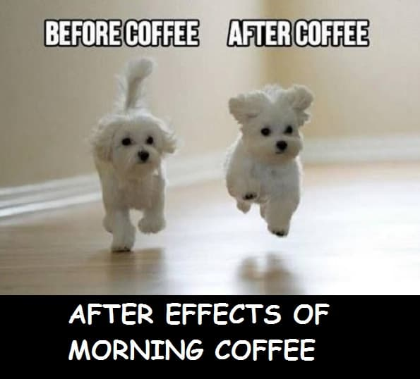 best funny good morning memes