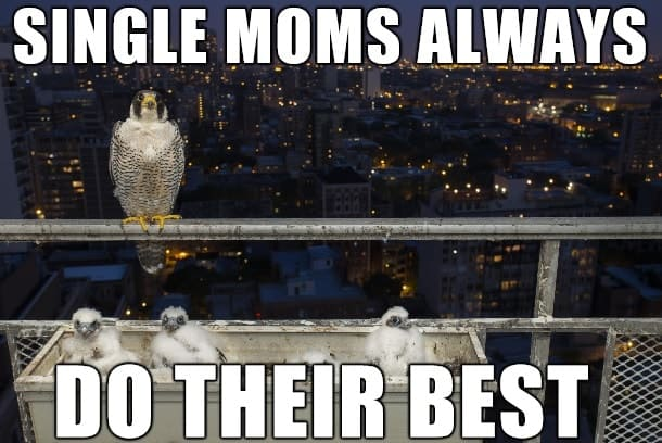 popular single mom memes