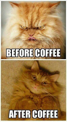 popular I need coffee memes