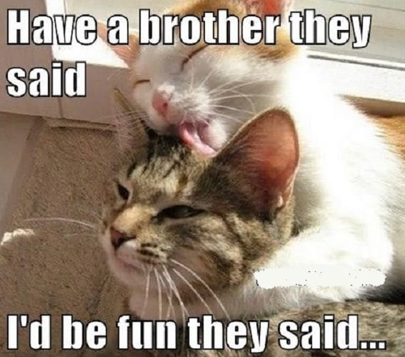 funny brother memes that make you laugh