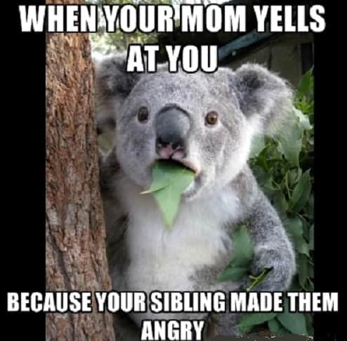 funny memes regarding siblings