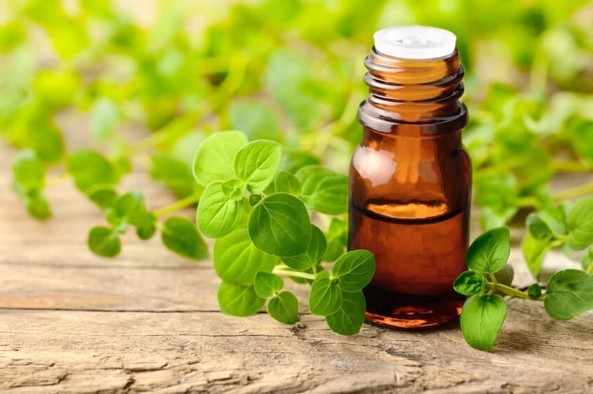 Oregano Oil for Herpes